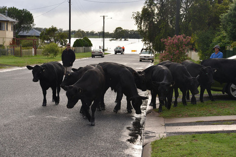 Long, hard slog ahead for Warwick district farmers - Toowoomba Chronicle | Farming and Agriculture | Scoop.it