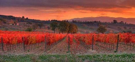Panoram Italia - Sagrantino di Montefalco Great Wines from Umbria | Gusto Wine Tours - Umbria | Scoop.it