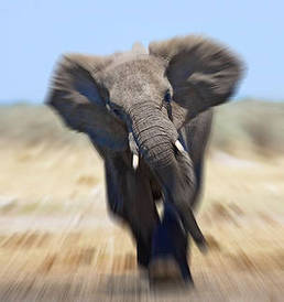 With wildlife populations cut in half, governments need to redouble efforts | GarryRogers NatCon News | Scoop.it