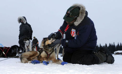 5 things to know about Iditarod's furry athletes | 6th Grade Iditarod | Scoop.it