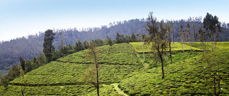 Search Hotels in Ooty  From Travelguru | Hotel Search India | Scoop.it