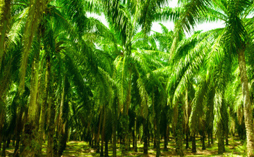 Success! Kellogg's Will Stop Using Palm Oil from Damaged Habitats | Nature Animals humankind | Scoop.it