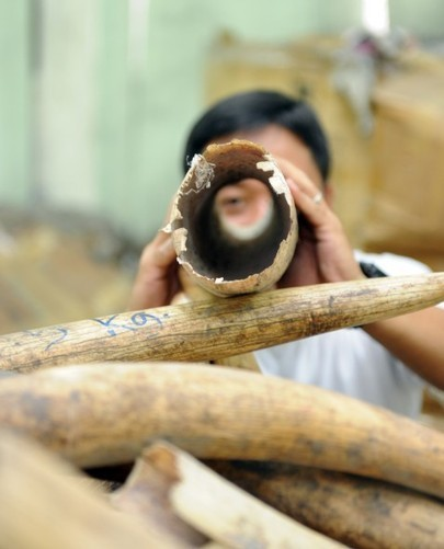 Governments Reluctant to Tackle Wildlife Trafficking, Says WWF | Wildlife Trafficking: Who Does it? Allows it? | Scoop.it