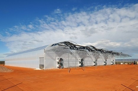Seawater Greenhouses Produce Tomatoes in the Desert – State of the Planet | Local Food Systems | Scoop.it