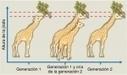 Capítulo 17. Evolución: historia de la teoría y sus evidencias | Biología, 7ma edición | Curso SEP + Bunam | Scoop.it