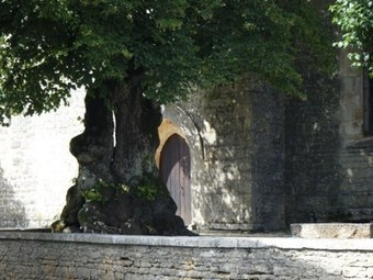 Elisez l'arbre de l'année 2013 | Chroniques d'antan et d'ailleurs | Scoop.it