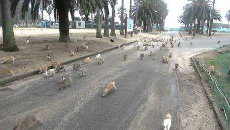 A Herd of Wild Rabbits Chase Down a Woman Giving Out Treats During Her Visit To 'Rabbit Island' in Japan   Random   Scoop.it