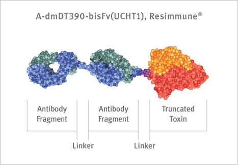 FDA Fast Track Designation forAngimmune's Investigational Cutaneous T-cell Lymphoma Disease Treatment  Resimmune®/A-dmDT390-bisFv(UCHT1) | Immunology and Biotherapies | Scoop.it