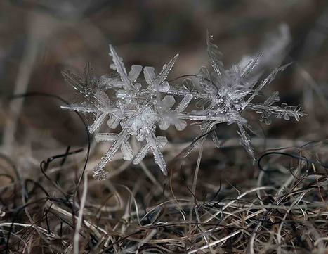 Macro Photography Makes Snowflakes Larger Than Life | logotexnia | Scoop.it