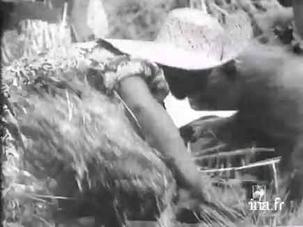 Mussolini participe à la campagne de battage des blés  - 1934-01-01 - (Jalons pour l'histoire du temps présent - Ina) | La propagande | Scoop.it