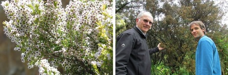 News - One Erica species colonised the Cape 10 to... | Global change | Scoop.it