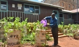 How to grow food in a slum: lessons from the sack farmers of Kibera | International aid trends from a Belgian perspective | Scoop.it