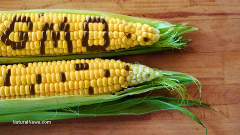 International court calls on Mexico to ban genetically modified corn | Plant Based Transitions | Scoop.it