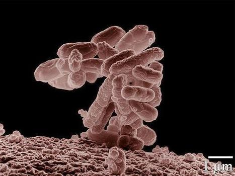 Antibiotic resistant Salmonella traced from farm to shop | The Politics of Food | Scoop.it