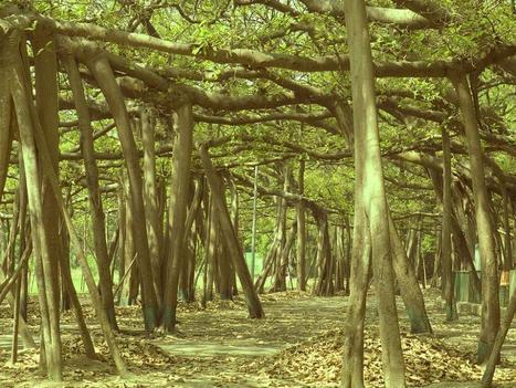 Ada Pemandangan yang Unik di Taman Botani Kolkata India | Forum.Jalan2.com | Scoop.it