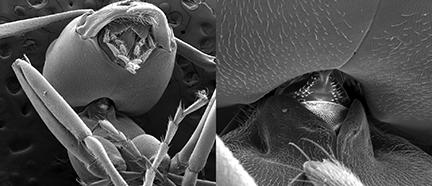 Des nouvelles des insectes : La tête sur les épaules | EntomoNews | Scoop.it