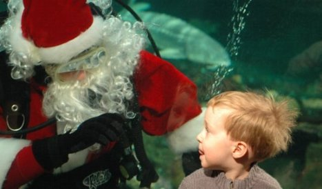 Santa May Fly Through the Sky but Scuba Claus Prefers a Dive and ... | Scuba Diving Adventures | Scoop.it