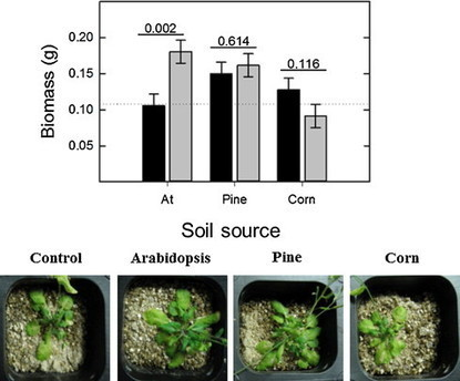 Soil microbiomes vary in their ability to confer drought tolerance to Arabidopsis | Plant Science | Scoop.it