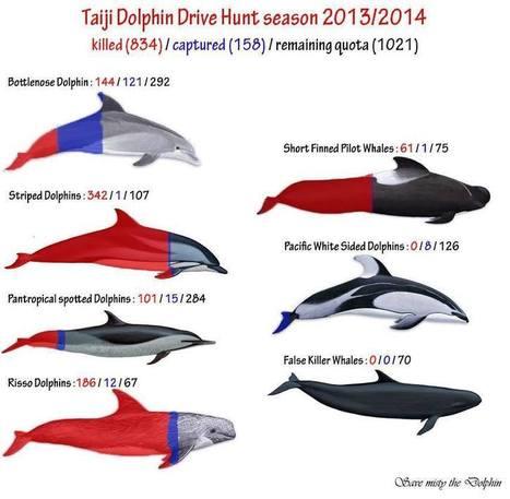 Massacres de dauphins au Japon - Fin de la saison de chasse 2013/2014 à Taïji... | Nature Animals humankind | Scoop.it