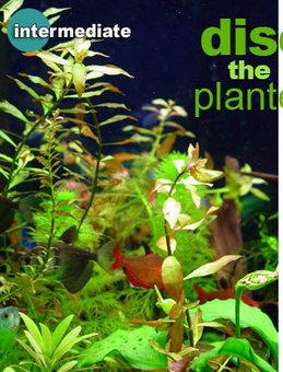Basic Planted Aquariums set up | Aquarium | Scoop.it
