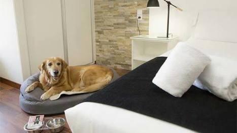 Establecimientos Pet Friendly | Congresos, Educación y Tendencias en Turismo | Scoop.it