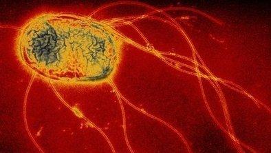 Ham inquiry over salmonella outbreak | ALS Animals | Scoop.it