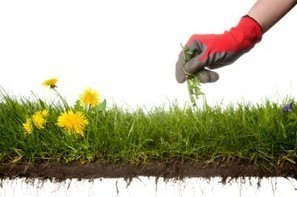"Weeds: A ""Very Good"" Creation? Secondary Activities (6-12)   Secondary Science Scoop   Scoop.it"