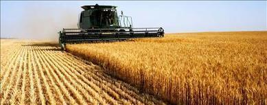 Wheat Harvest 2016 - Combines start spring wheat in South Dakota | Grain du Coteau : News ( corn maize ethanol DDG soybean soymeal wheat livestock beef pigs canadian dollar) | Scoop.it