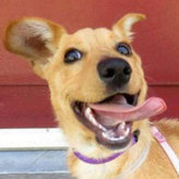 7 Solid Reasons to Adopt a Mutt | Dogs | Scoop.it