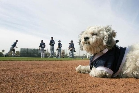 Meet Hank, The Newest Major League Mascot | Mascots in the news | Scoop.it