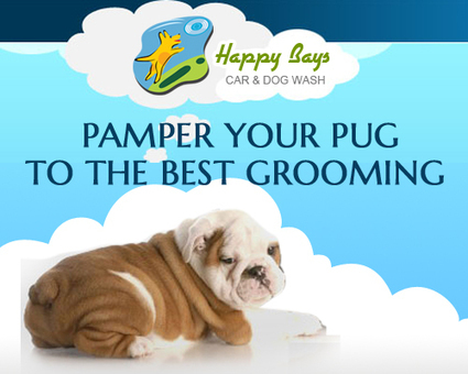Pamper your Pug to the Best Grooming | Good Dog and Pet Washing Service | Scoop.it