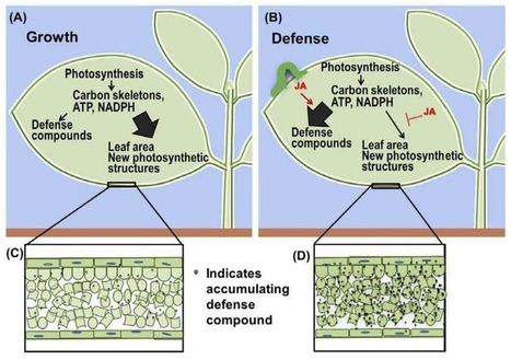 Control of Carbon Assimilation and Partitioning by Jasmonate: An Accounting of Growth–Defense Tradeoffs | Extracellular ATP and ectoapyrase in plants | Scoop.it