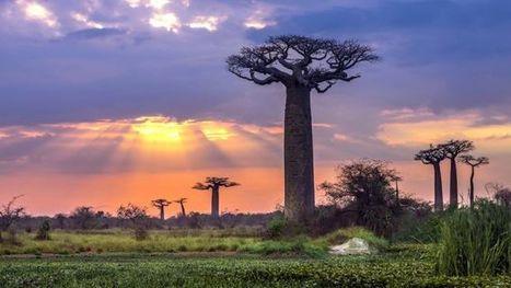 Madagascar: les donateurs promettent 6,4 milliards $ pour financer @Investorseurope#Mauritius | Investors Europe Mauritius | Scoop.it