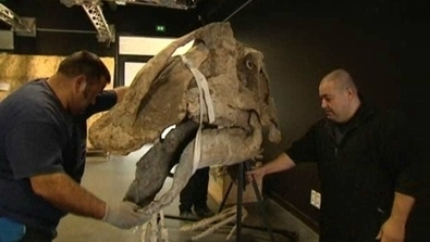 Villers-sur-mer (14) : des squelettes de dinosaures...!!! 53sIMtOMr8tBgGWM4Gb8lTl72eJkfbmt4t8yenImKBVaiQDB_Rd1H6kmuBWtceBJ