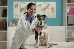 Mississippi Animal Hospital | Veterinary Pet Care in Aurora CO | Mississippi Animal Hospital | Scoop.it