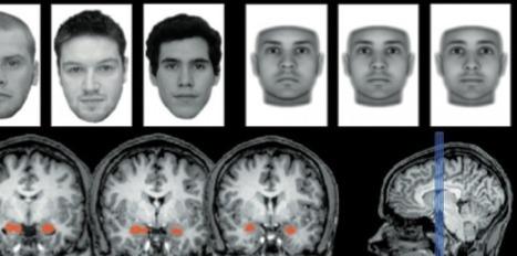 Notre cerveau juge la fiabilité d'un individu sans le voir - Sciences et Avenir | Psycho-Santé | Scoop.it