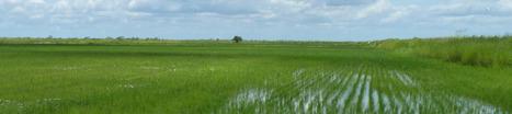 (ES) - Glosario | Riceweeds | Glossarissimo! | Scoop.it