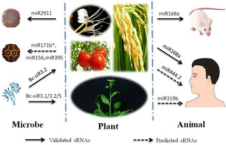 Horizontal Transfer of Small RNAs to and from Plants | plant virus | Scoop.it