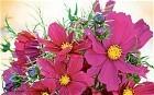 Sarah Raven's favourite new flowers - Telegraph.co.uk | Amazing Rare Photographs | Scoop.it