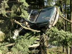 Oregon driver cited for parking car in tree | Strange days indeed... | Scoop.it