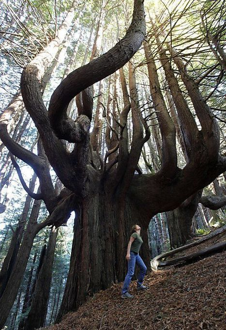 Very Funny Tree | Travel - Places, Destinations, Vacations | Scoop.it