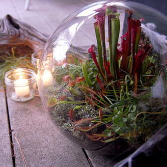 DIY : un terrarium spécial Halloween !!! | DIY DIY | Scoop.it