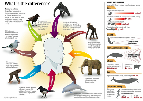 The Difference Between Humans and Animals | Visual.ly | Animals R Us | Scoop.it