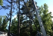 Xtreme Tree Worx (xtremetreeworx) | The Best Tree Service Contractor in Dallas GA | Scoop.it