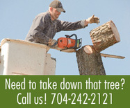 A Kings Tree and Stump Removal   Tree Removal Monroe   Scoop.it