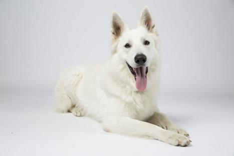 Insolite. L'un des chiens les plus heureux de France se trouve près ... - Côté Toulouse | Nestle | Scoop.it