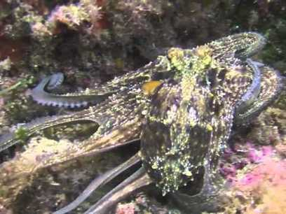 The best of Diving in Elba - YouTube | Dove Fare Diving | Scoop.it