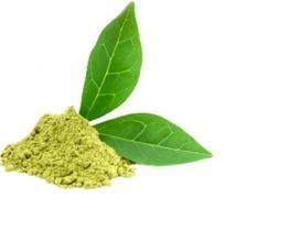 9 plantes pour traiter et prévenir le diabète | Santé naturelle | Scoop.it