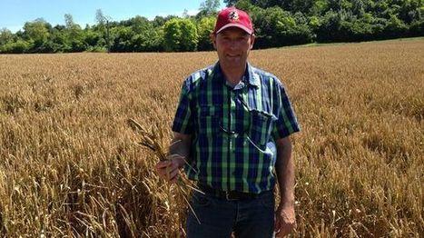 Les agriculteurs champardennais s'attendent à une récolte catastrophique | Chimie verte et agroécologie | Scoop.it