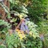 Green Gnome Garden News